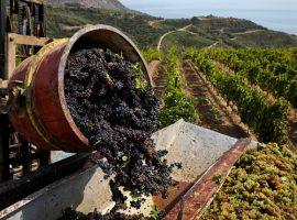 Структуры банка «Россия» посадят в Крыму один из крупнейших виноградников