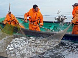 Минсельхоз раскритиковал идею выставлять квоты на вылов рыбы на аукционы