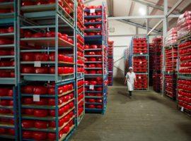 В России стали меньше производить заменители сыра