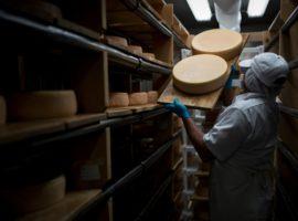Импорт молочных продуктов достиг максимума за все годы продэмбарго