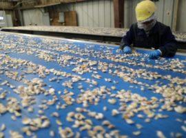Компании из Китая перестали закупать сельхозпродукцию после угроз Трампа