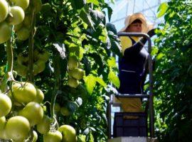 Основатели «Долины овощей» выкупят у Вексельберга теплицы
