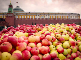 Рекордный урожай не остановил рост цен на яблоки